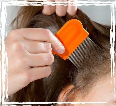 Head Lice – Help!