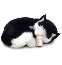 Precious Pets – Kitten